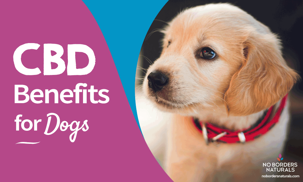 cbd benefirs for dogs